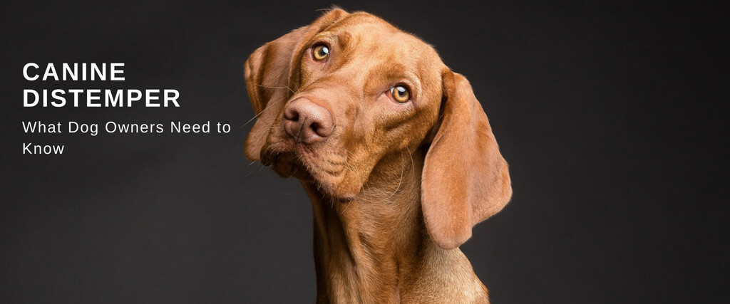 what is the distemper vaccine for dogs called