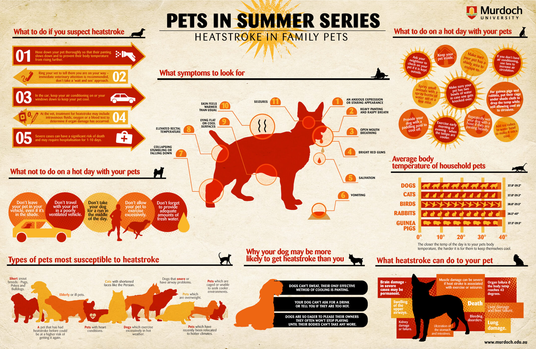 Infographic of heatstrokes and pets