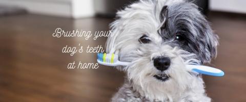 brush my dog's teeth at home