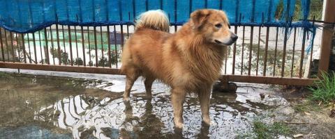 disaster preparedness for pets