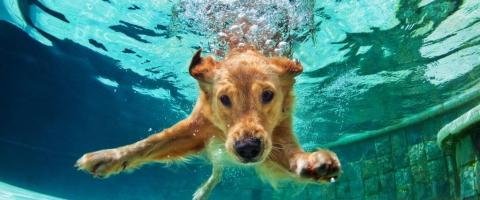 keep dogs safe around pools