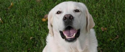 pet wellness month dog wellness