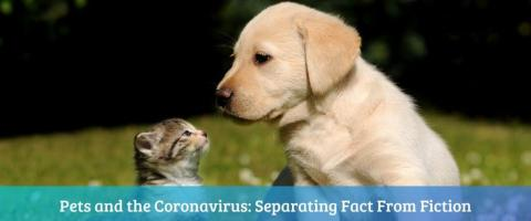 Pets can't spread coronavirus