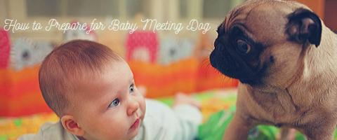 preparing for baby to meet dog