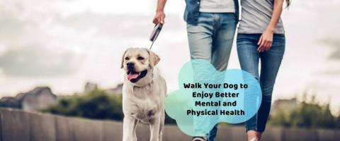 walk your dog for better health