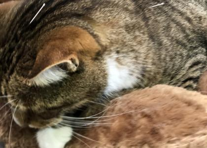 Acupuncture for cats at Viera East