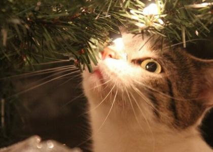 Christmas Cat Safety Tips