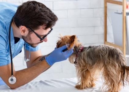 fear free pet veterinary