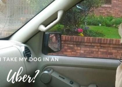 Dog in passenger seat of a car